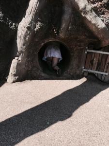 Just a minor wardrobe malfunction at the zoo...