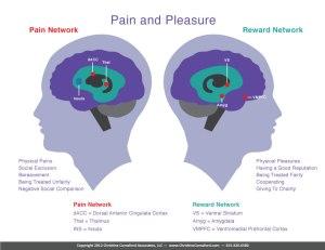 Brain_Pain-and-Pleasure_D3